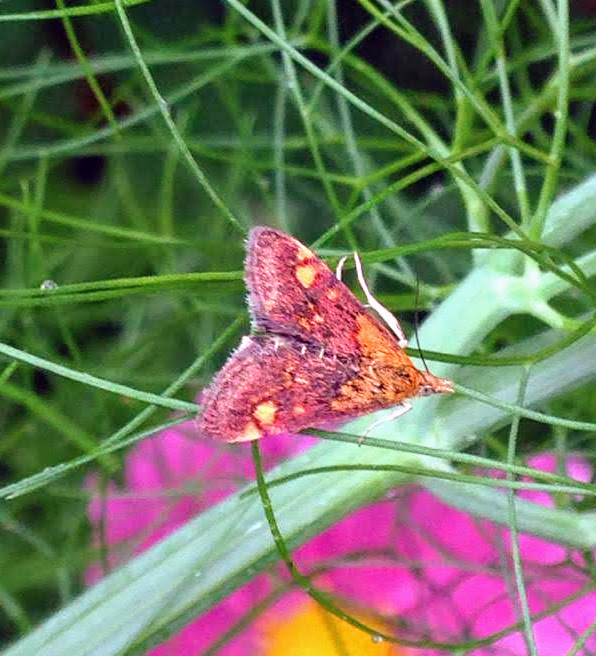 colourful-moth