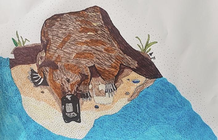 Sam-Jevon-platypus