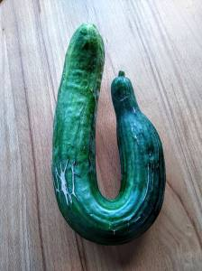 Mishaped-cucumber