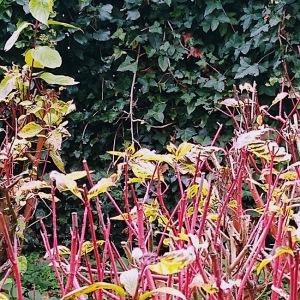 Foliage-winnall-moors-winchester